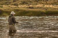 Sea Run Brown Trout | Kau Tapen Argentina