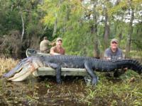 Florida Trophy Alligator | Option 1