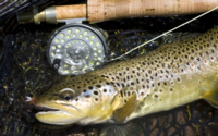 CO Merriam's and Fly Fishing