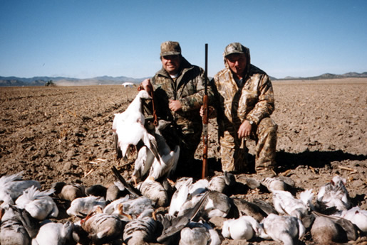 Old Mexico Waterfowl
